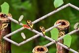 Pirštų laiko skruzdėlių takelius